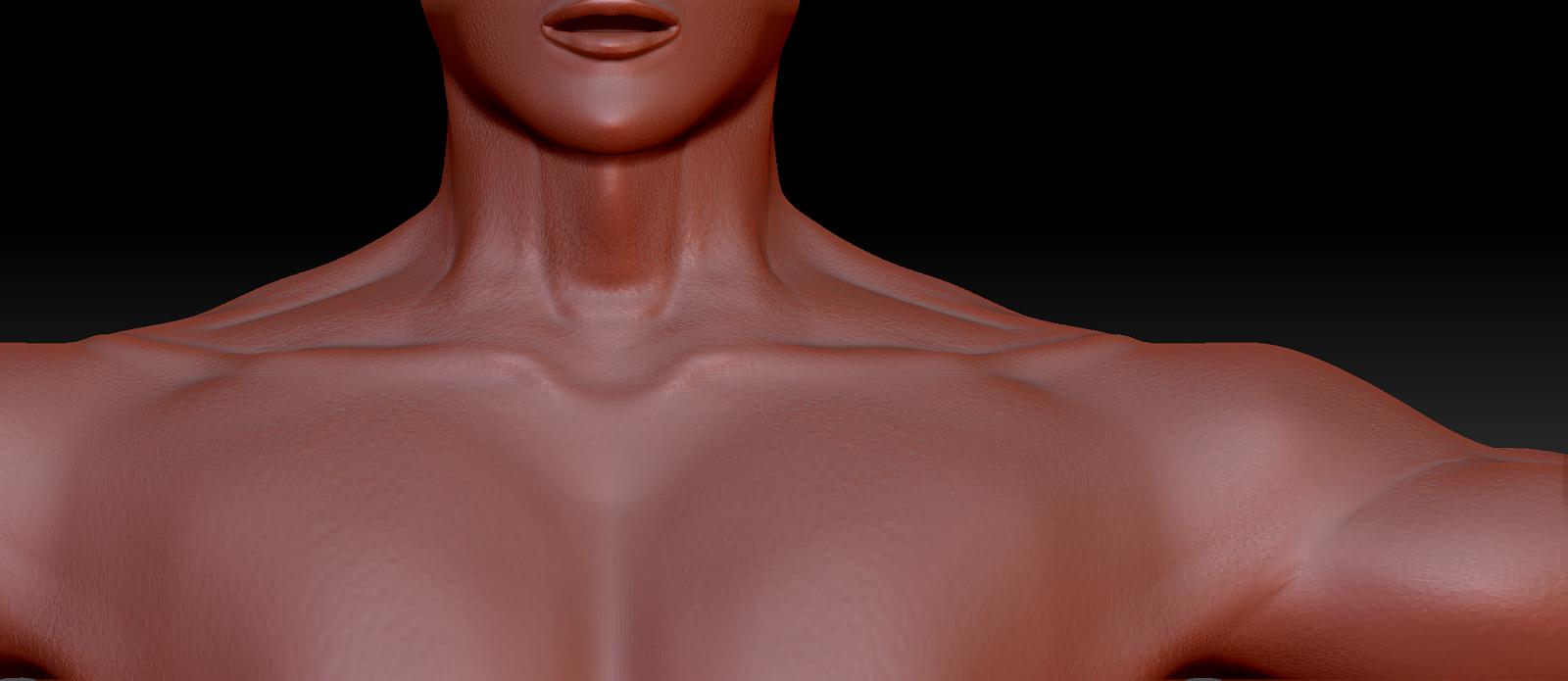 Zbrush anatomy study